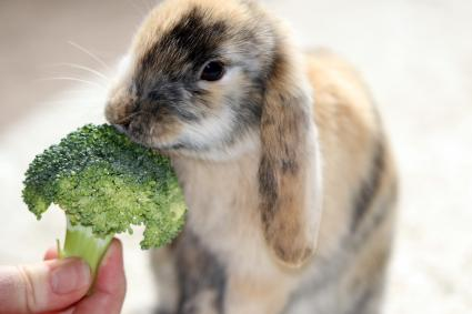 bunny eating broccoli