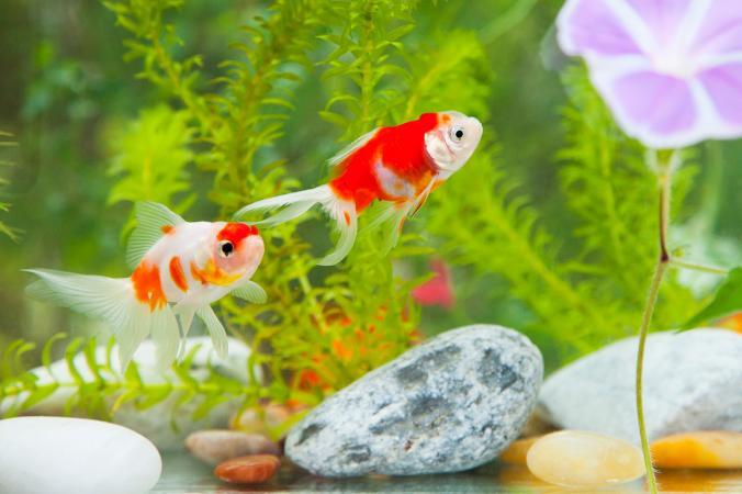 pair of fish in aquarium
