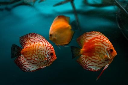 Group of colorful fish