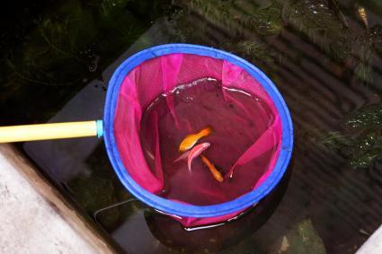 Aquarium Fish Net