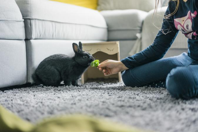 Girl feeding her rabbit lettuce