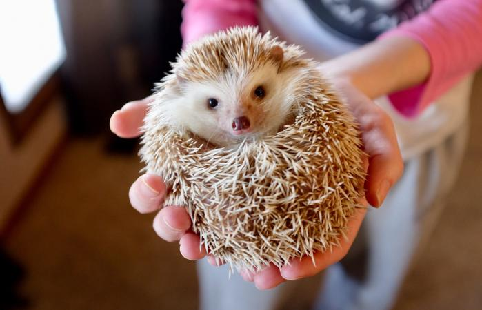 holding a hedgehog in a ball