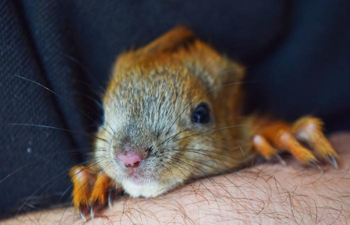Handy little squirrel