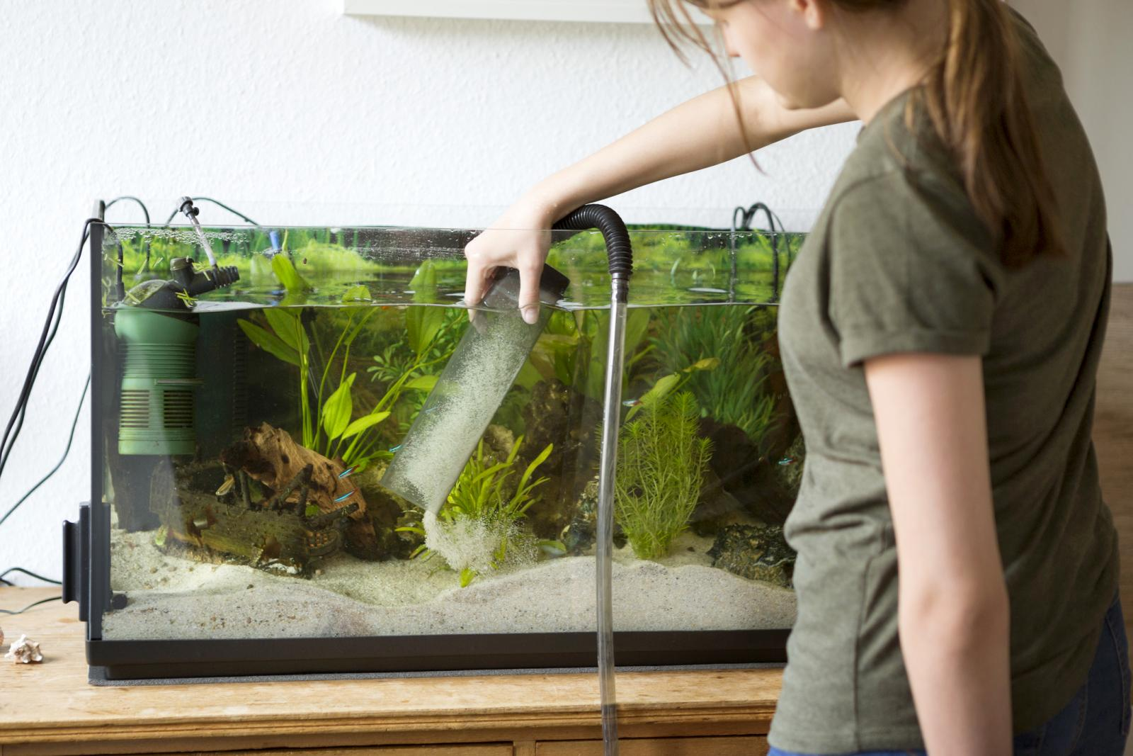 Teenage girl cleaning sand in a home aquarium with a siphon pump
