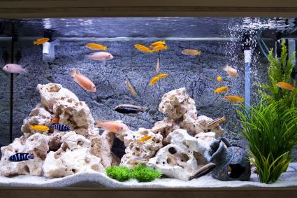 New Empty Fish Tank