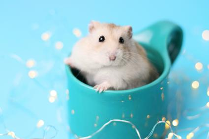 Dwarf hamster sitting in a mug
