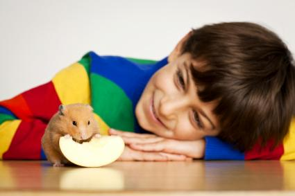 Smiling Kid Looking To A Hamster
