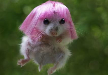 Hamster with wig