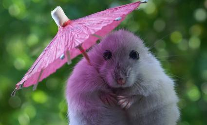 Hamster with Parasol