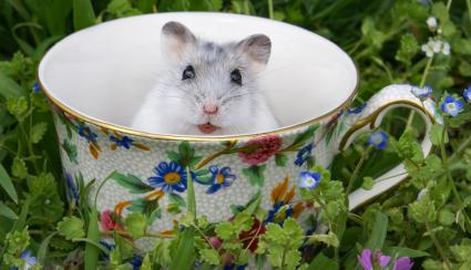 Hamster in teacup on grass