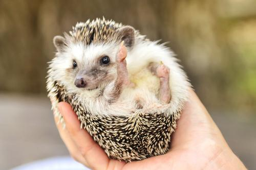 person holding a hedgehog