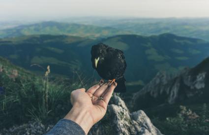 Hand Holding Crow