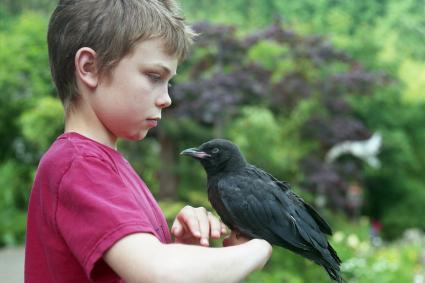 Crow perched on arm of boy