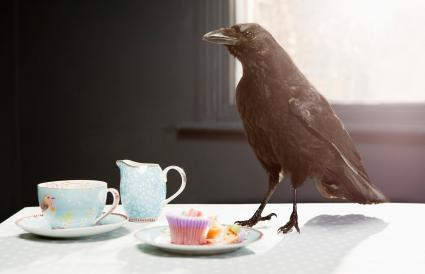Crow standing on table with cupcake