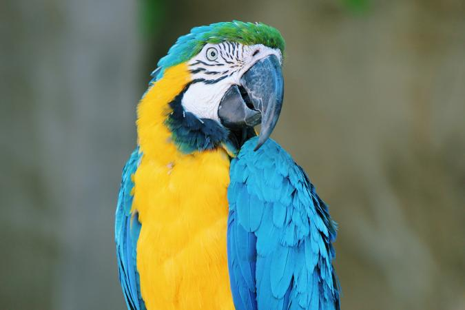 Closeup of colorful parrot