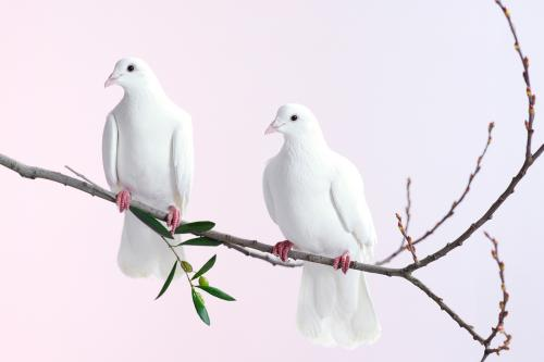2 doves perching on branch