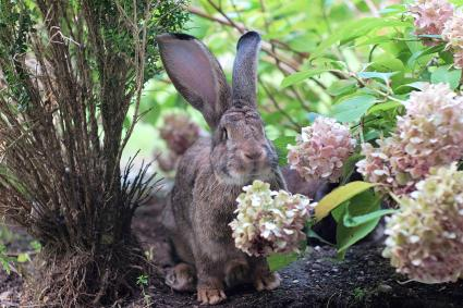 Rabbit By Flowering Plants