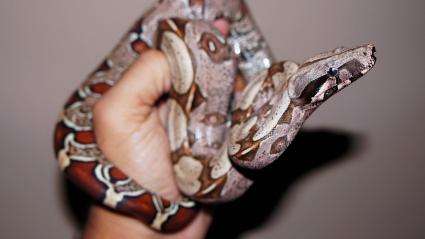 Hand Holding Python