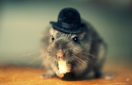 Gerbil wearing a hat