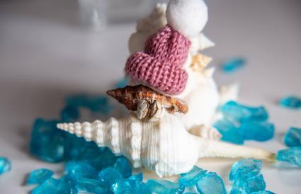 Hermit crab wearing knit hat