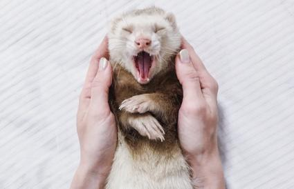 woman holding ferret