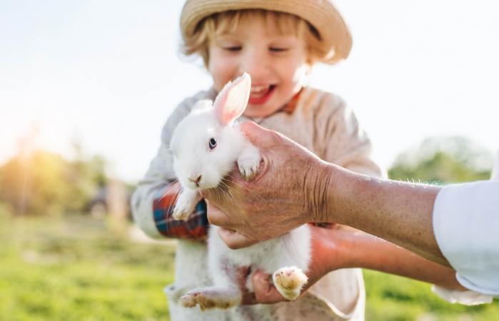 boy holding rabbit