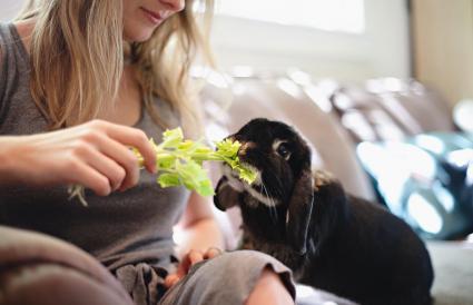 woman feeds her rabbit