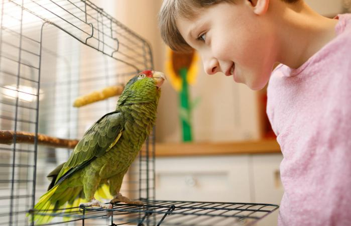 friendship between kid and parrot