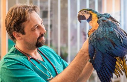 veterinarian examining parrot