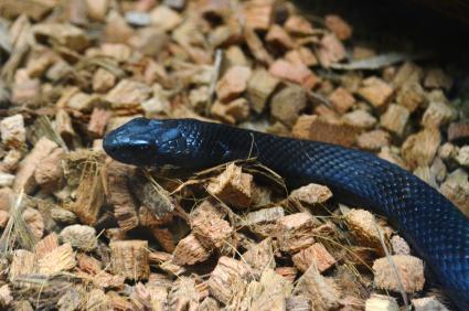 Pet snake in terrarium