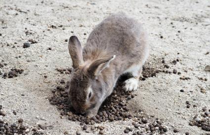 rabbit digging