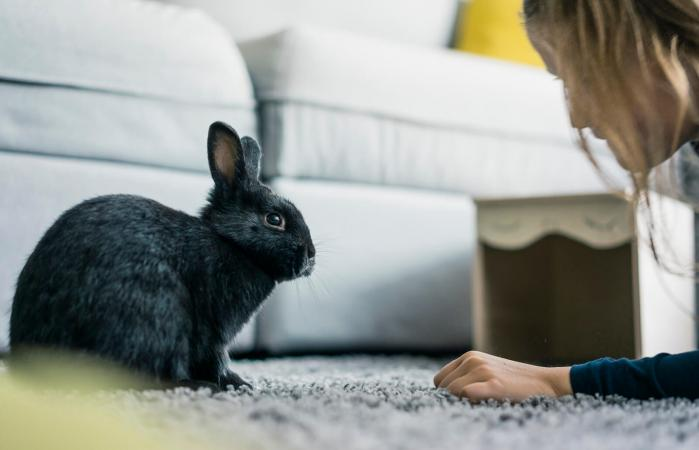 Girl with hare in living room