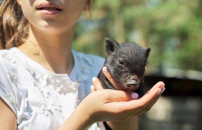 girl holding pet pig