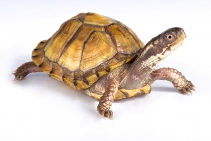 reptiles4all/iStock/Getty Images Plus/Getty Images