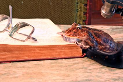 Big frog leaning over a book