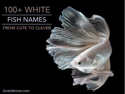 White Fish Swimming
