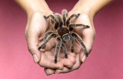 woman holding tarantula