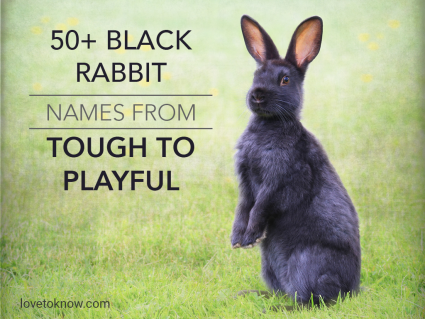 Black Rabbit Names From Tough to Playful