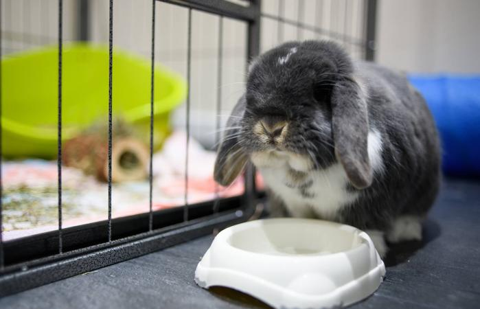 rabbit outside cage