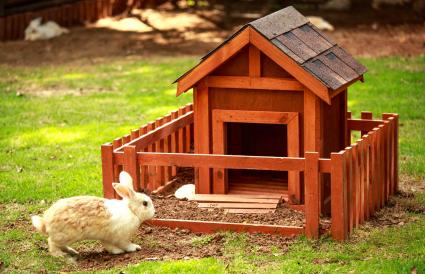 Rabbit in front of the hutch