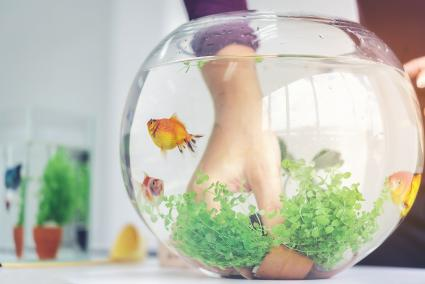 A woman's hand is decorating the aquarium in a fishbowl
