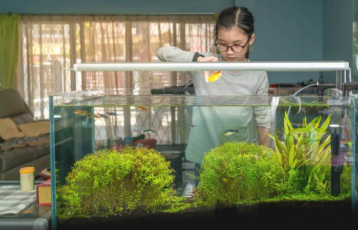 Live Plants in an Aquarium