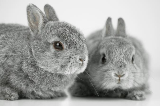 Two rabbits on white background