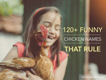 Funny ideas for chicken names