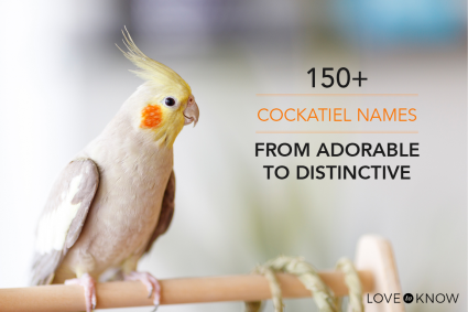 150+ cockatiel names