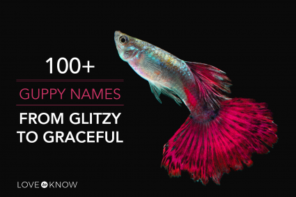 100+ guppy names