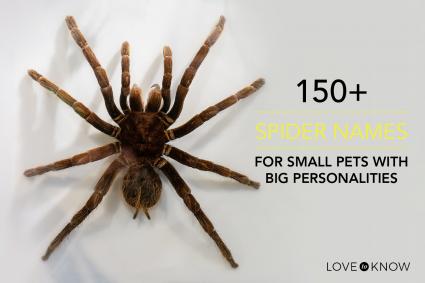 150+ spider names