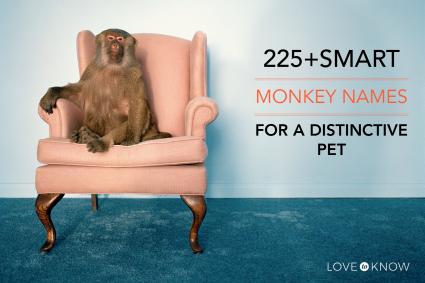 225+ smart monkey names
