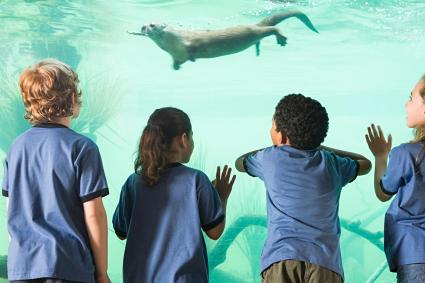 Kids looking at otter swimming