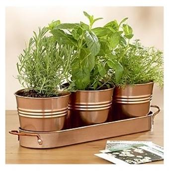 https://cf.ltkcdn.net/stress/images/slide/159091-591x600r1-aromatherapy-growkit.jpg